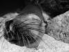 Relaxing seal