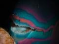 Parrotfish's teeth
