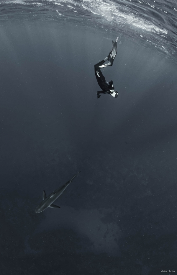 Shark and freediver