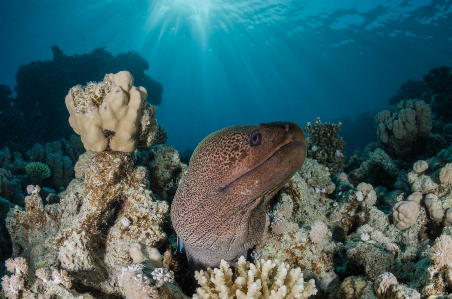 Moray eel under the sunrays
