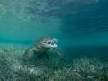 Cutie croc