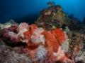 Scorpionfish under the sunburst