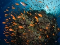 Abudance of coral reef
