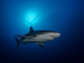 Shark under the sunball